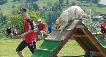 Turnierhundesport